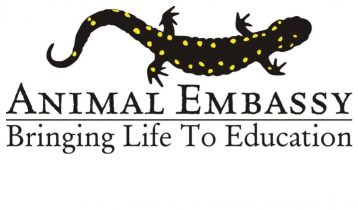 Animal Embassy: Tale of Two Tails